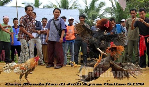 Cara Mendaftar di Judi Ayam Online S128